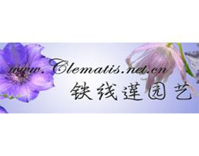 铁线莲园艺论坛