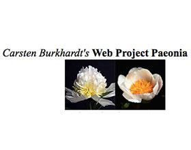 Carsten Burkhardt's牡丹网站 Carsten Burkhardt's Web Project Paeonia