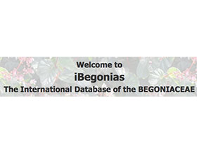 国际秋海棠数据库 International Database of the BEGONIACEAE