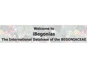 国际秋海棠数据库 International Database of the BEGONIACEAE