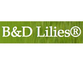 B&D 百合 B&D Lilies