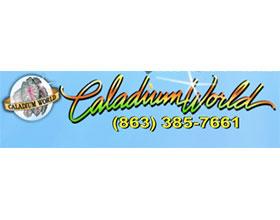 花叶芋世界 Caladium World