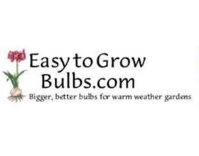 容易种植的鳞茎植物 Easy to Grow Bulbs