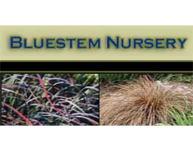 须芒草苗圃 Bluestem Nursery