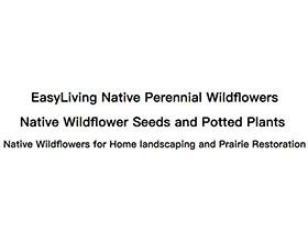 容易种植的野花 Easywildflowers