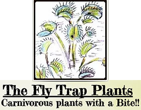捕蝇草 Fly Trap Plants