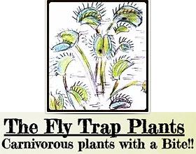 捕蝇草 Fly Trap Plants