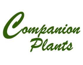 伴侣植物 Companion Plants