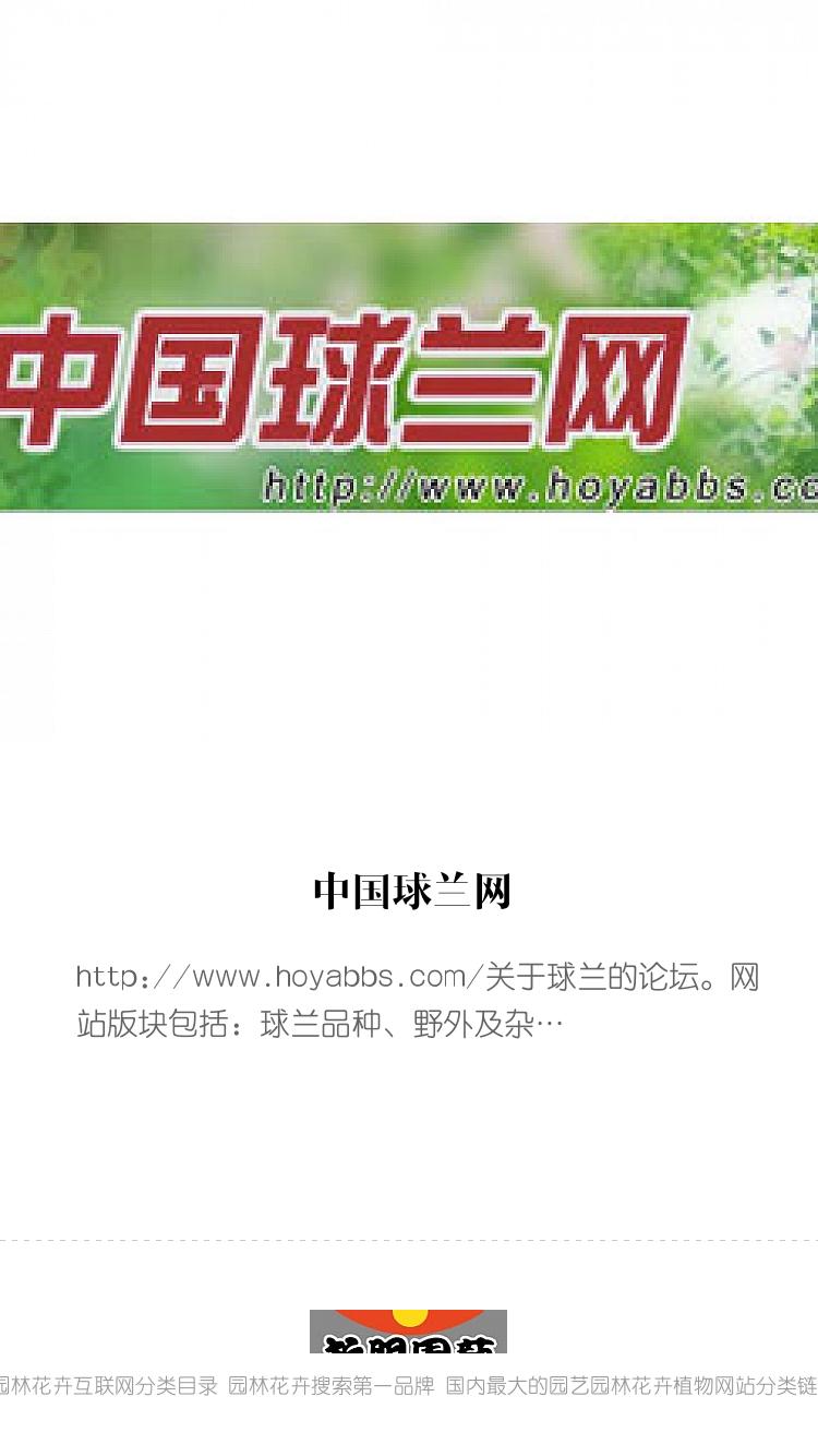 中国球兰网 bigger封面