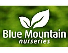 蓝色山脉苗圃, Blue Mountain Nurseries