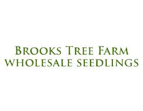 布鲁克斯树木农场 Brooks Tree Farm