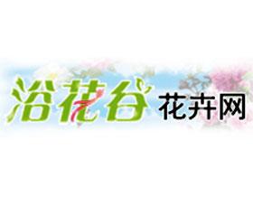 浴花谷花卉网