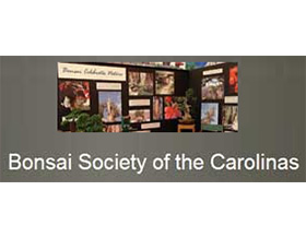 卡罗莱纳盆景俱乐部, Bonsai Society of the Carolinas