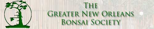 大新奥尔良盆景协会,The Greater New Orleans Bonsai Society