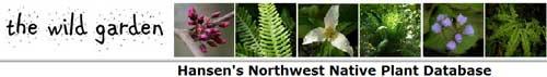 Wallace W Hansen 西北乡土植物数据库,Wallace W Hansen Northwest Native Plant Database