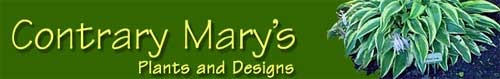 Contrary Mary的植物在线,Contrary Mary's Plants Online