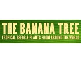 香蕉树, THE BANANA TREE