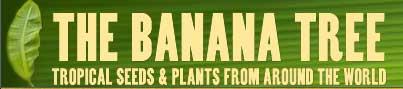 香蕉树THE BANANA TREE