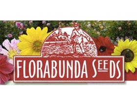 花卉种子, Florabunda Seeds