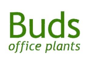 萌芽办公室植物, Buds Office Plants