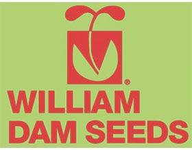 威廉大坝种子 William Dam Seeds