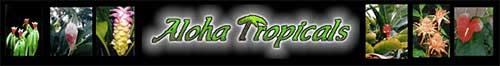 爱热带植物Aloha Tropicals