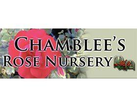 钱布利月季苗圃 Chamblee's Rose Nursery