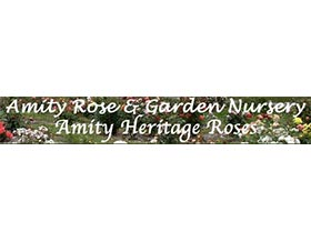 Amity传统月季, Amity Heritage Roses