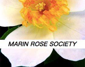 马林月季协会 Marin Rose Society