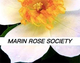 马林月季协会, Marin Rose Society