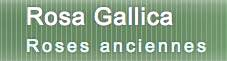 法国月季(玫瑰)协会 Rosa Gallica