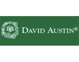戴维奥斯汀月季David Austin Roses