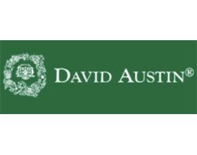 戴维奥斯汀月季(玫瑰)David Austin Roses