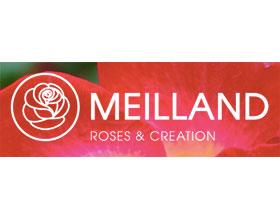 法国玫昂国际月季(玫瑰)公司MEILLAND International