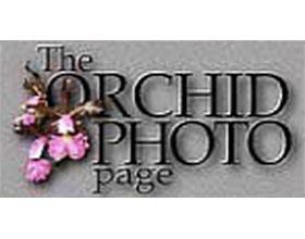 兰花图片网站 ,Orchid Photo Page