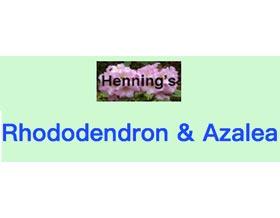 Henning的高山杜鹃和杜鹃, Henning's Rhododendron & Azaleas