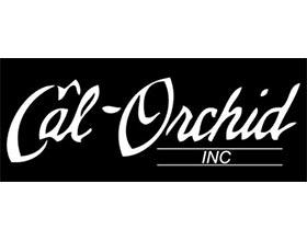 CAL兰花公司 ,Cal Orchid