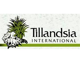 铁兰国际, Tillandsia International