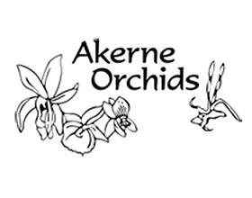 Akerne 兰花 ,Akerne Orchids