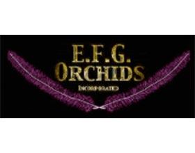 EFG兰花公司