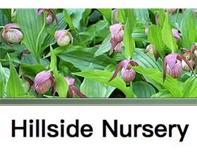 山坡苗圃 ,Hillside Nursery