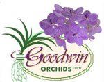 GOODWIN兰花 ,Goodwin Orchids