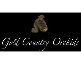 金色乡村兰花, Gold Country Orchids