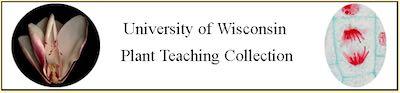 威斯康辛大学植物教学收藏