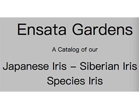Ensata 花园 ,Ensata Gardens