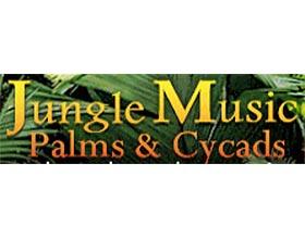 丛林音乐棕榈和苏铁 Jungle Music Palms and Cycads
