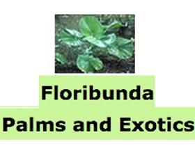 开花棕榈和异国植物, Floribunda Palms and Exotics