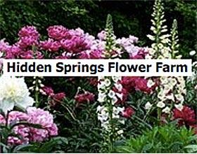 隐藏的春天花卉农场 ,Hidden Springs Flower Farm