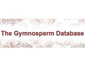 裸子植物数据库 Gymnosperm Database