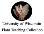 威斯康辛大学植物教学收藏 University of Wisconsin Plant Teaching Collection
